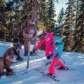 5 x leuk op wintersport in Eben im Pongau