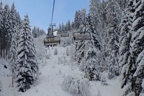 Skilif flachau sneeuw op bomen