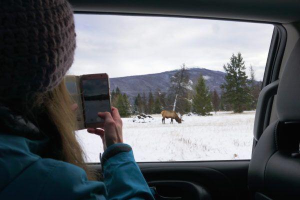 wildlife spotten in Jasper