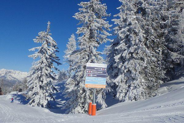 Sneeuw op de bomen