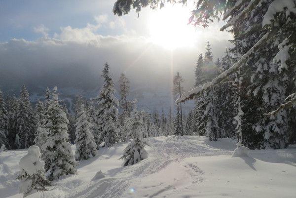 Sneeuwzeker Oostenrijk - nordstau in Eben