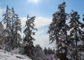Wintersport kerstvakantie: ligt er genoeg sneeuw met kerst?