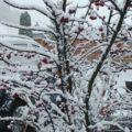 Live: het sneeuwt in Oostenrijk – winterbeelden 26 nov. 2018