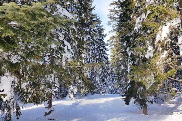 zwanger op wintersport? Ga winterwandelen